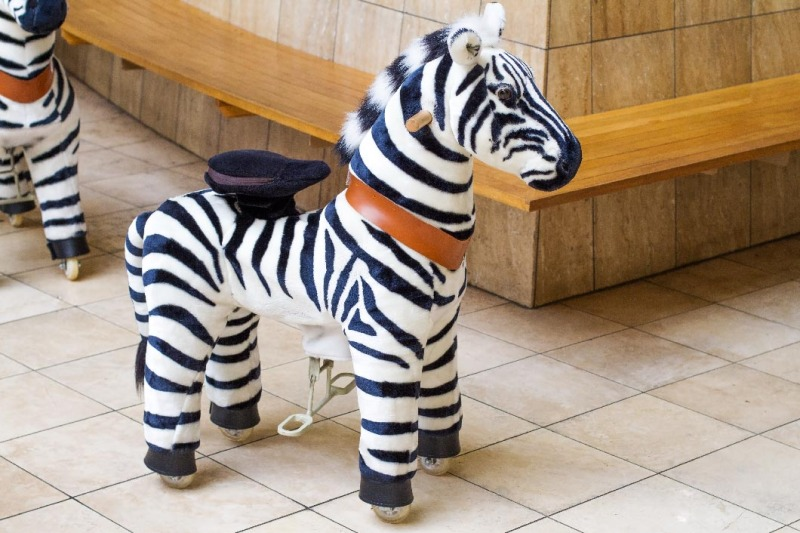 hali-hali-rides-zebra-1